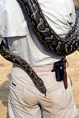 Snake - p6520588 by Mark Hannaford