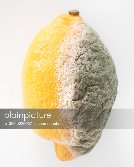 Mouldy lemon against white background - p1366m2260571 by anne schubert