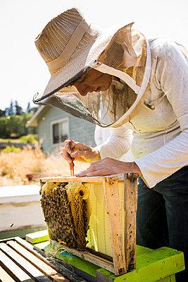 Female beekeeper working at field - p1166m1508430 by Cavan Images