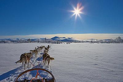 Sweden, Jamtland, Snasahogarna, Storvallen, View of dog sled - p352m1141743 by Anders Ekholm