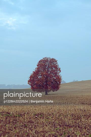 Single Autumnal tree - p1228m2222524 by Benjamin Harte
