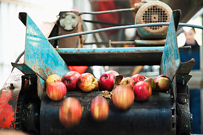 Apples being processed on conveyor belt - p555m1452615 by John Rizzo