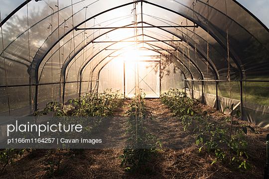 p1166m1164257 von Cavan Images