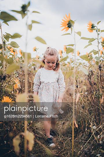 Kleines Mädchen in einem Sonnenblumenfeld - p1628m2294561 von Lorraine Fitch