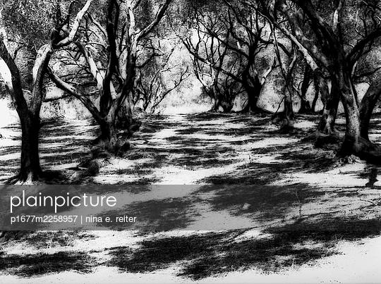 Olive plantation - p1677m2258957 by nina e. reiter