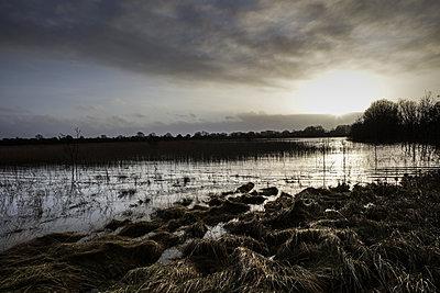 Wetland In Ireland - p1082m1528472 by Daniel Allan