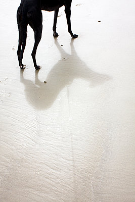 Dog legs and shadow - p1121m1440490 by Gail Symes