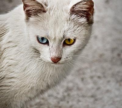 Street cat - p1445m2125676 by Eugenia Kyriakopoulou