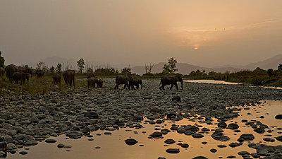 Corbett-Nationalpark; Indien - p910m763763 von Philippe Lesprit