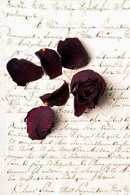 Blüten im Brief - p4510771 von Anja Weber-Decker