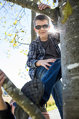 Young man climbing tree. - p1166m2202150 by Christopher Kimmel / Alpine Edge Photography