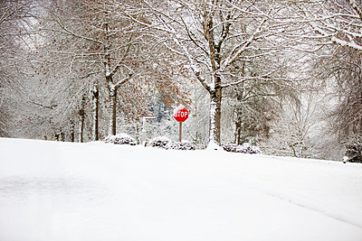 Snow On A Stop Sign - p44212054f by Craig Tuttle