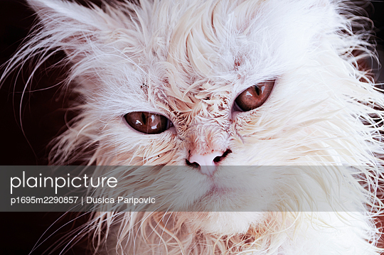 Wet cat - p1695m2290857 by Dusica Paripovic