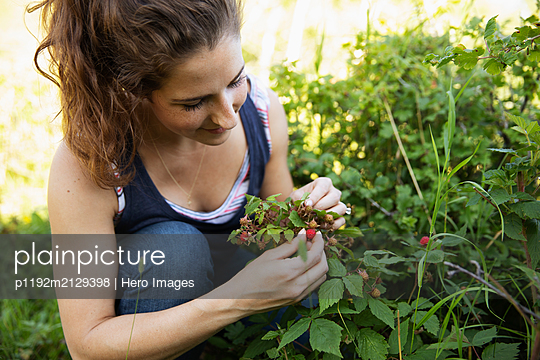 Young woman picking wild berries from plant - p1192m2129398 by Hero Images