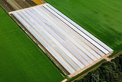 Bulb field - p1120m925631 by Siebe Swart