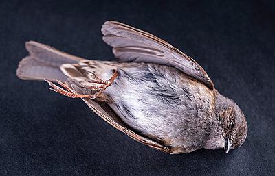 Dead bird - p971m1425430 by Reilika Landen