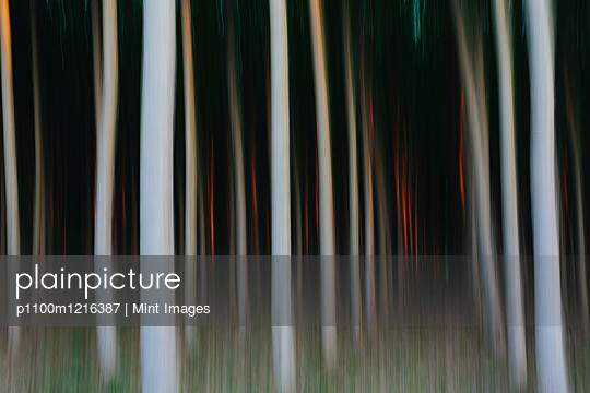 p1100m1216387 von Mint Images