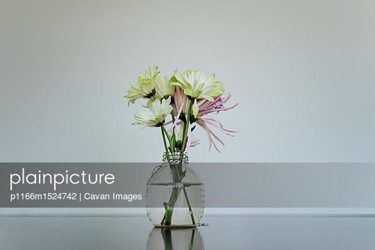 p1166m1524742 von Cavan Images