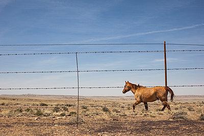 Horse - p1291m1586694 by Marcus Bastel
