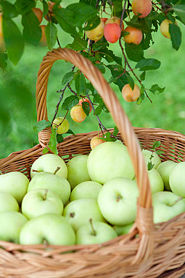 Fresh apples - p4541485 by Lubitz + Dorner