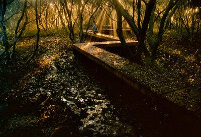 Mangrove walkway - p1125m1042657 by jonlove
