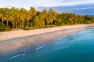 Australia, Queensland, Palm trees on coastline - p1427m1504574 by WalkerPod Images