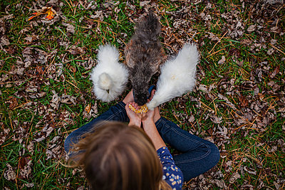 Overhead view of girl feeding baby chickens while sitting on field at farm - p1166m1176249 by Cavan Images