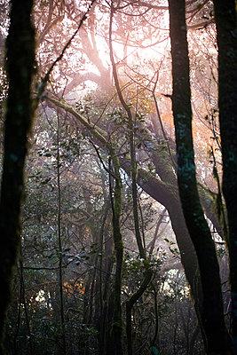 Licht im Nebelwald - p161m902910 von Kerstin Schomburg