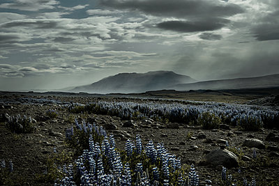 Iceland in summer - p741m2108945 by Christof Mattes