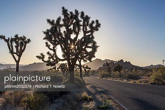 p651m2032378 von Richard T Nowitz