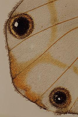 Macro Butterfly - p1054m2278042 by Maria Kazvan
