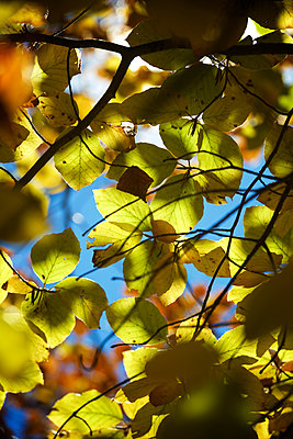 Low angle view of leaves on branches in forest during autumn - p1166m2066067 by Cavan Social