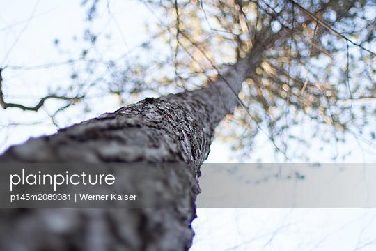 p145m2089981 by Werner Kaiser