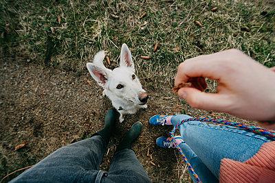 Weisser Hund  - p1184m2065115 von brabanski