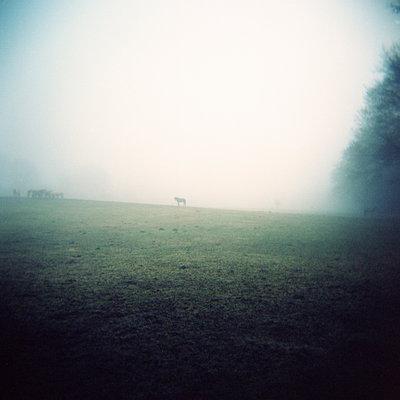 Pferde auf Weide - p1197m995460 von Stefan Bungert