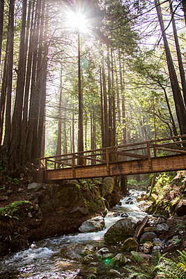 Sunbeams on bridge over forest stream - p555m1482074 by Adam Hester