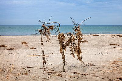 Deserted Western beach of Darß - p1168m1525820 by Thomas Günther