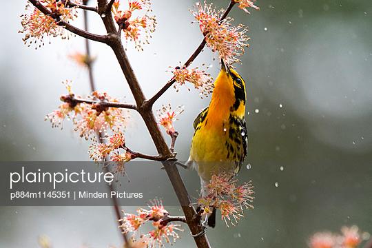 p884m1145351 von Minden Pictures