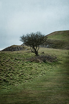 Single gnarled tree on a hilltop - p1047m1510722 by Sally Mundy