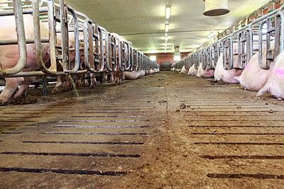 Tierhaltung - p1058m817169 von Fanny Legros