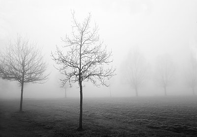 Nebel - p1494m2008317 von Inkje Drescher