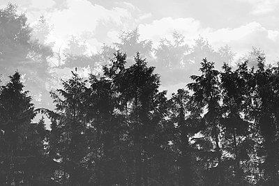 Des arbres dans les nuages - p987m2219000 by Célia Swaenepoel