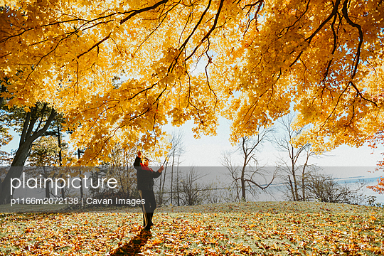 Young child grabbing colourful leaves on a tree branch in a park. - p1166m2072138 by Cavan Images