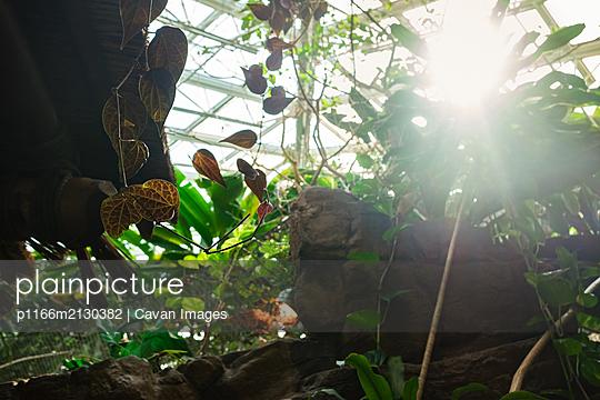 Greenhouse sunlight through tropical plants - p1166m2130382 by Cavan Images
