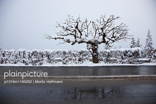Verschneiter Baum an einer Strasse, Flims, Kanton Graubünden, Schweiz - p1316m1160452 von Moritz Hoffmann