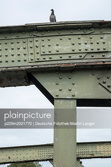 Taube auf einer Brücke - p229m2021770 von Martin Langer