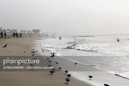 Möwen am Strand - p756m2082081 von Bénédicte Lassalle