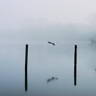 Single seagull in the fog, Alster river, Hamburg - p1696m2296550 by Alexander Schönberg