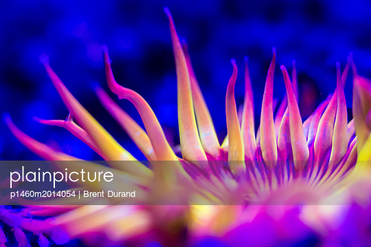 p1460m2014054 von Brent Durand