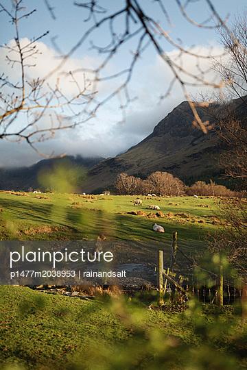 Schafe auf einer Weide - p1477m2038953 von rainandsalt